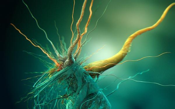 Wachstum kubischer Bakterien